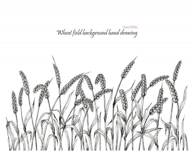 Пшеничное поле фон рука рисунок