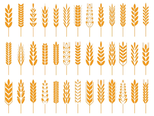 Wheat grain icons. wheats bread logo, farm grains and rye stalk symbol isolated icon
