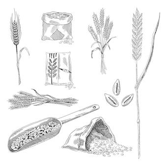 Коллекция эскизов зерна пшеницы. рисованной черно-белый набор растений зерна пшеницы. сельское хозяйство