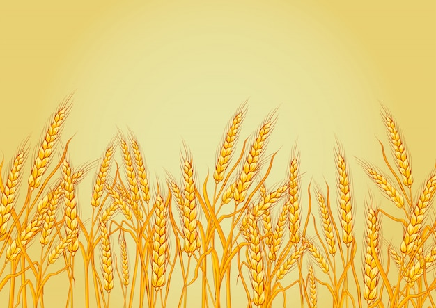 Wheat isolated on yellow