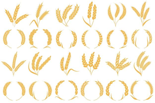 밀 또는 보리 귀. 황금 곡물 수확, 줄기 곡물 밀, 옥수수 귀리 호밀 보리 유기농 밀가루 농업 식물 빵 패턴 및 프레임 모양 컬렉션