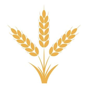 Колосья пшеничные или ржаные с зернами. связка из трех желтых стеблей ячменя. векторная иллюстрация.