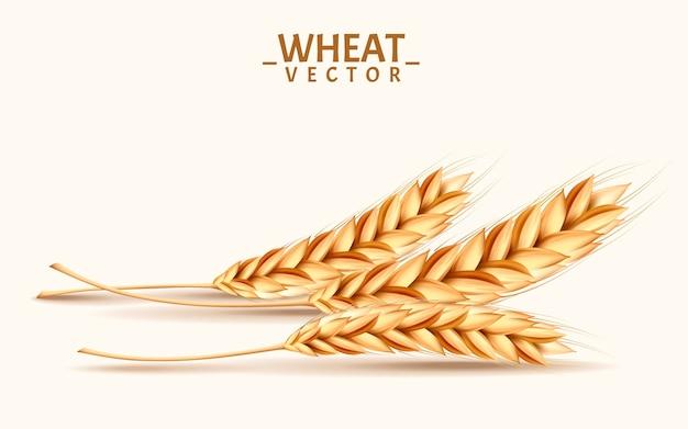 Реалистичные иллюстрации пшеницы можно использовать в качестве элементов дизайна