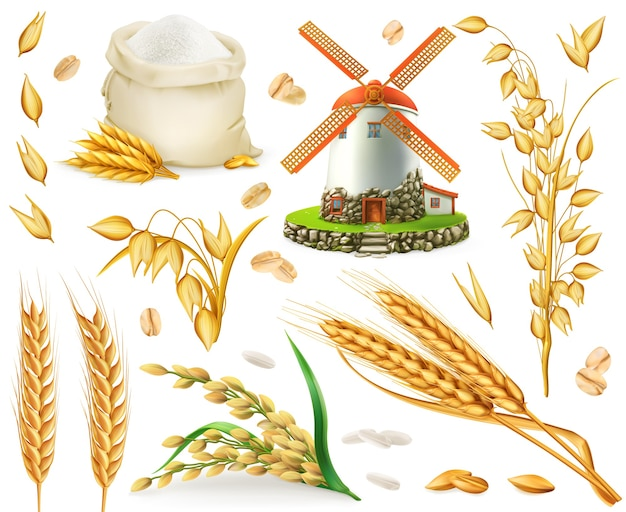 Wheat, rice, oats, barley, flour, mill, grain. 3d realistic vector elements set