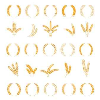Wheat and rye ears. harvest barley grain, growth rice stalk. field cereal icons set. wreath spikes and stalks vector bordure elements for business signs