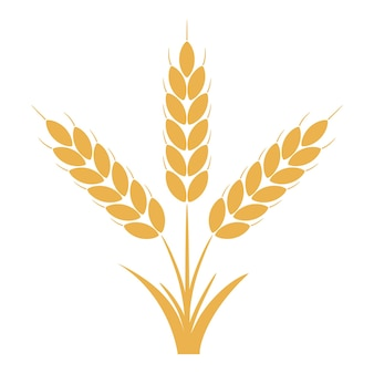 Wheat or rye ears with grains. bunch of three yellow barley stalks. vector illustration.