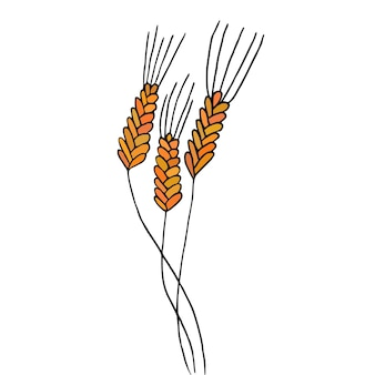 Wheat spikelets isolated on white. vector illustration.