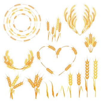 Wheat spikelets vector illustration.