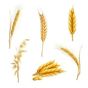 Пшеница, векторный набор