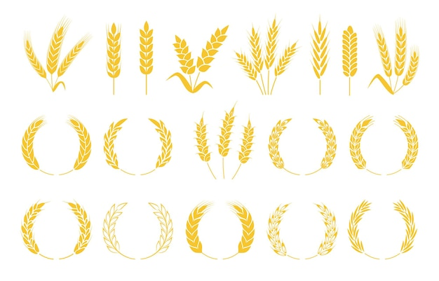 Wheat wreaths rice ears barley spikes rye grains and crops organic cereal plants set
