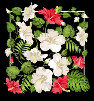 White and red hibiscus flowers in rectangle frame over black background