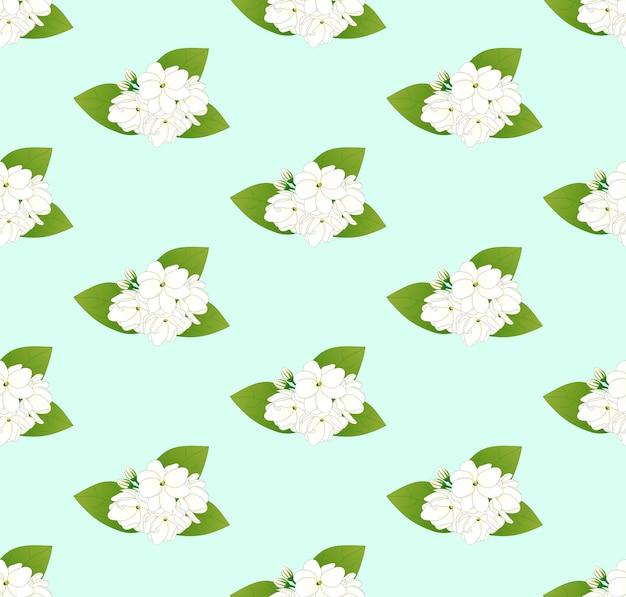 White arabian jasmine on green mint background