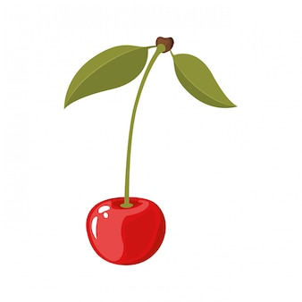 White background of realistic cherry with stem and leaves vector illustration