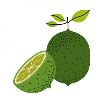 White background with one lemon fruit and half lemon cut and without contour vector illustration