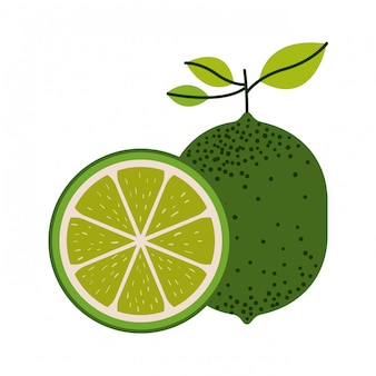 White background with one lemon fruit and lemon slice and without contour vector illustration