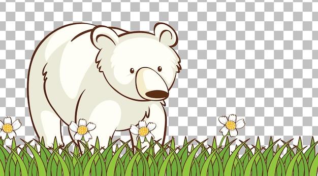 Orso bianco seduto sul campo in erba su sfondo trasparente
