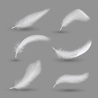 White birds feather  set,  realistic
