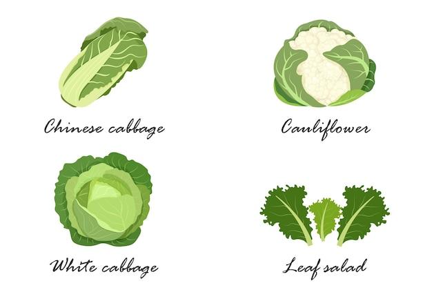 白菜、白菜、カリフラワー、レタス、野菜の名前。食用の菜食主義の緑の植物。