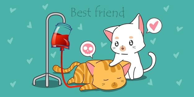 白猫はその病気の友達を世話しています。