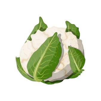 白いカリフラワー野菜。白い背景に分離されたカリフラワー。