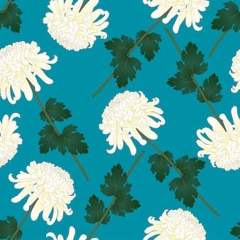 White chrysanthemum flower on indigo blue background