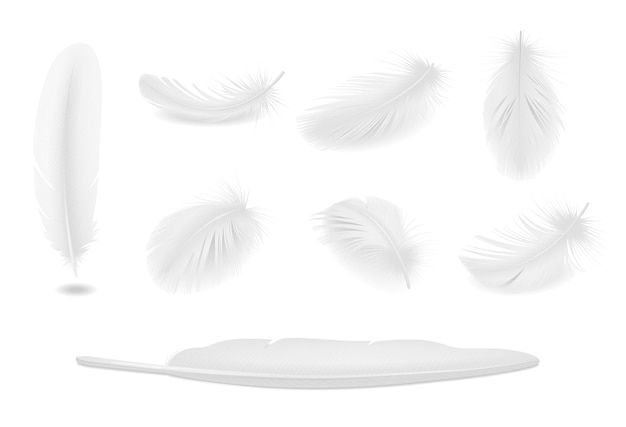 White clean bird feathers realistic set isolated