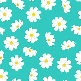 White cosmos flower on blue mint background