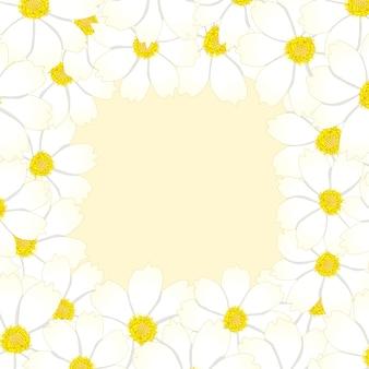 화이트 코스모스 꽃 테두리입니다.
