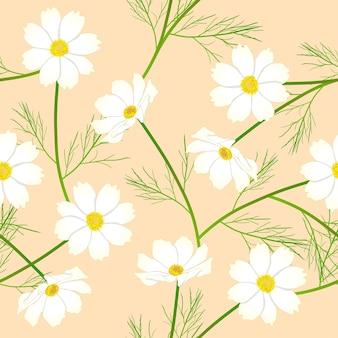 베이지 색 상아 배경에 화이트 코스모스 꽃