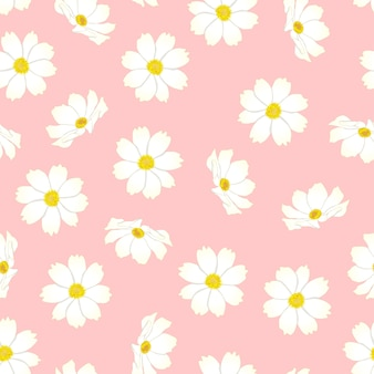 분홍색 배경에 흰색 코스모스 꽃