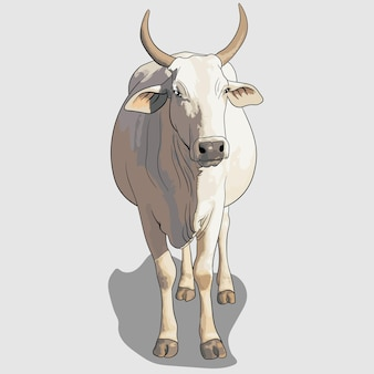 White cow portrait hand drawn illustrations and vectors