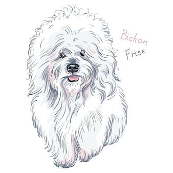 白いかわいい犬ビションフリーゼの品種