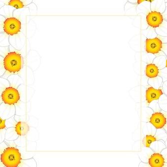 White daffodil - narcissus flower banner card border