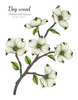 Белый цветок кизила и рисунок листьев иллюстрации