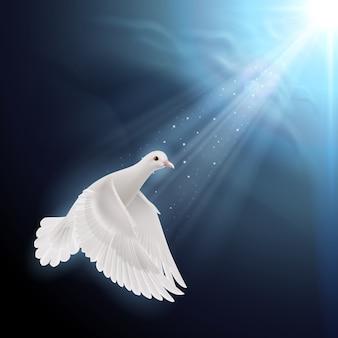 Белый голубь в солнечном свете