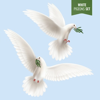 White dove set with olive branch