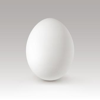 White egg  on background