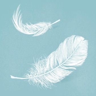 White feather vector graphic in blue background