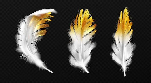 White feathers with gold glitter on edges, birds plumage or hackles with golden sparks, boho style trendy design elements isolated on black background, realistic 3d illustration, icons set