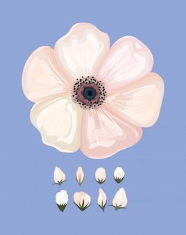 Белый цветок, живопись, природный цветочный орнамент, украшение сада, украшение сада и иллюстрация темы ботаники