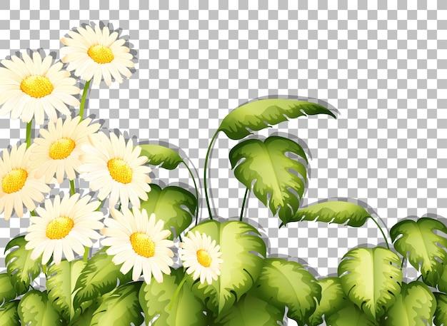 Modello di cornice di fiori bianchi su sfondo trasparente