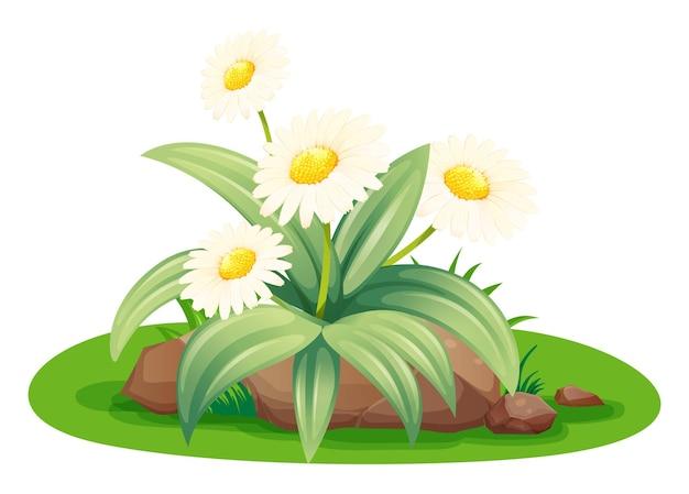 Белые цветы в кустах