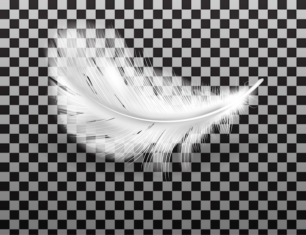 White fluffy feather with shadow realistic