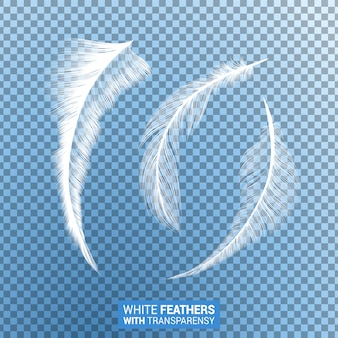 White fluffy feathers realistic transparent effect