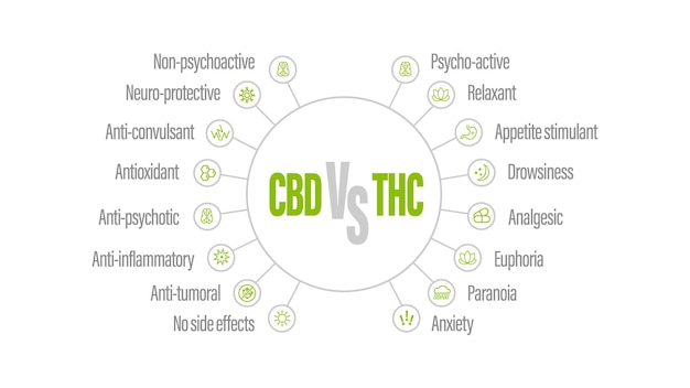 White infographic with comparison cbd and thc. cbd vs thc, list of differences with icons