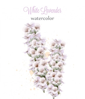 White lavender watercolor flowers