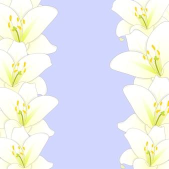 白い背景に白いユリの花のボーダー
