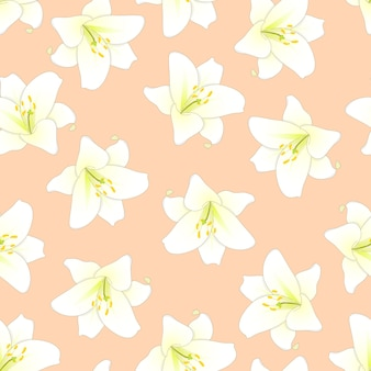 White lily on orange peach background