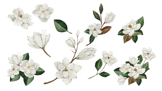 Набор акварельных цветов белой магнолии