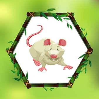 White mouse in bamboo frame